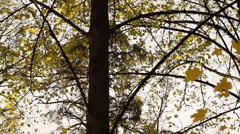 Beautiful autumn scenic of trees with fall foliage - HD 1920X1080 Stock Footage