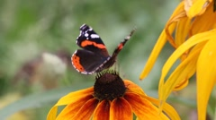 Butterfly on a flower Stock Footage