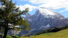 Cattle grazing in an Alpine meadow Seiser Aim, in the Italian Dolomites, Italy Stock Footage
