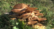 Stock Video Footage of mushrooms