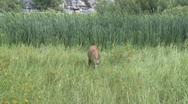 Deer Eating Grass Stock Footage