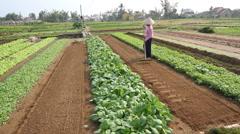 Farm Woman Raking Organic Herb Garden Vietnam Stock Footage