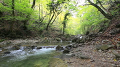 forest river - stock footage