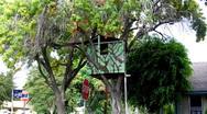 Kid's Tree House 2 Stock Footage