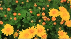 Flowers with caterpillar Stock Footage