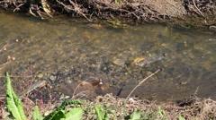 Wastewater, sewage and industrial, environmet Stock Footage