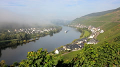 Morning mist and Vineyards, Zell Mosel, Germany Stock Footage
