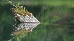 Old tree in the lake Stock Footage