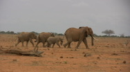 Elephant family walking away fast! Stock Footage