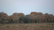 Elephants in a dirty water hole Stock Footage