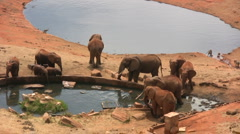 Elephants in a water hole Stock Footage