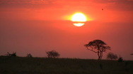 Elephants walking in the setting sun 2 Stock Footage