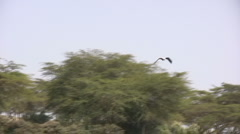 Fish eagle catches a fish 5 Stock Footage