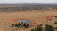 Zoom in of elephants in a water hole Stock Footage