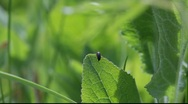 Stock Video Footage of Small bug on a leaf