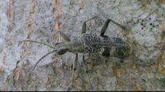 Longhorn beetle on a tree 7 Stock Footage