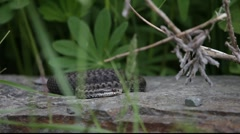 Snake lying on a stone 3 Stock Footage