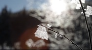 Stock Video Footage of Hoarfrost crystals growing on twigs