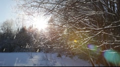 Snow-covered forest Stock Footage