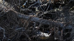 Stock Video Footage of Spring rivulet in a  forest
