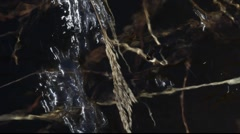 Water flowing fast over withered grasses Stock Footage