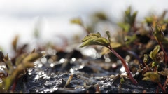Water from melting snow running through small plants Stock Footage