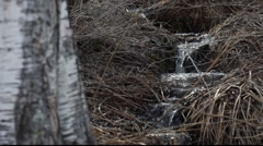 Spring rivulets in a  forest Stock Footage