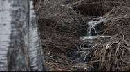 Stock Video Footage of Spring rivulets in a  forest
