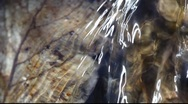 Stock Video Footage of Leaves at the bottom of a rivulet  seen through the water
