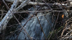 Stock Video Footage of Rivulet running through a thicket