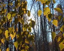 autumn sun - stock footage