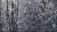Stock Video Footage of Hoarfrost crystals falling from trees