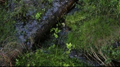 Brook running through a mixed forest Stock Footage