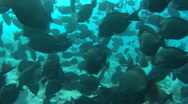 Stock Video Footage of black fish