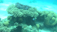 Coral & fish 1 - stock footage