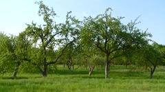 tree - stock footage