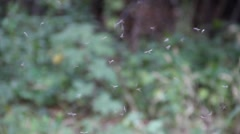 Mosquitos flying - stock footage