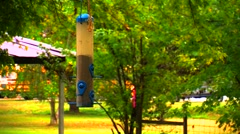 Finches at a Bird Feeder Stock Footage