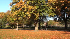 Walking the dog in autumn Stock Footage