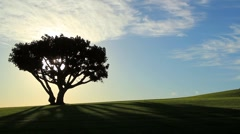 Tree Sits on a Green Lawn Stock Footage