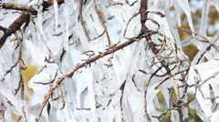Icicles in trees pan P HD 8034 Stock Footage