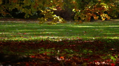 Autumn_4 Stock Footage
