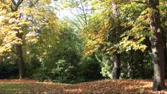 autumn trees - stock footage