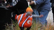 Stock Video Footage of Halloween Clown Fish