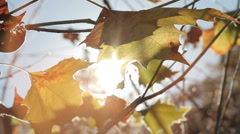 Fall Leaves Blowing in the Wind - stock footage