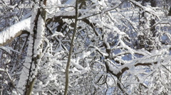 Snow falling from tree branch 5 Stock Footage