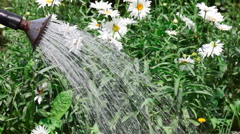Irrigation. Stock Footage