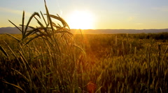 field and sunset - stock footage