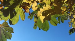 Autumn leaves top border Stock Footage