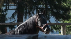 Horse riding Stock Footage
